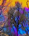 Bare Trees In Color